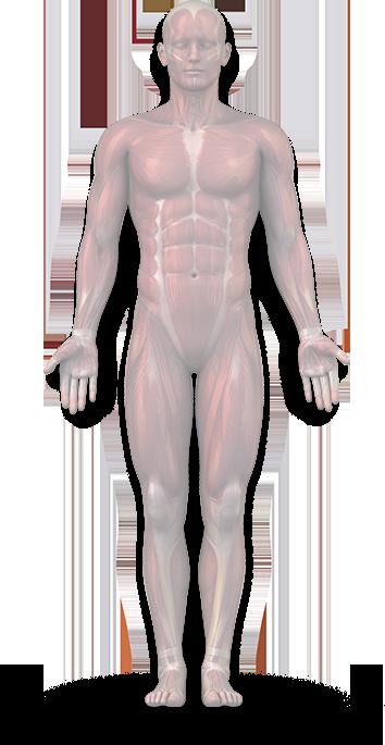 9 ok, amely térdízületi gyulladást okoz   Well&fit